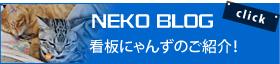 NEKO BLOG 車堂看板猫紹介 看板にゃんずのご紹介!